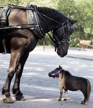 le-plus-petit-cheval-du-Monde