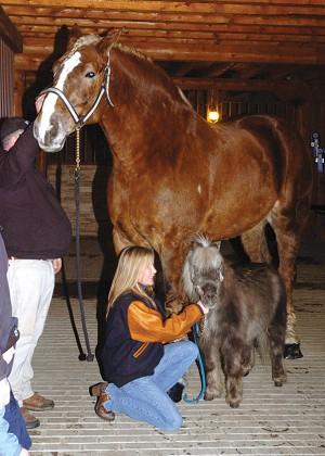 Hier, Big Jake a été élu cheval le plus grand du monde par le Guinness des records dans le Wisconsin aux Etats-Unis