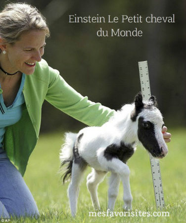 Einstein_le-plus-petit-cheval-du-Monde