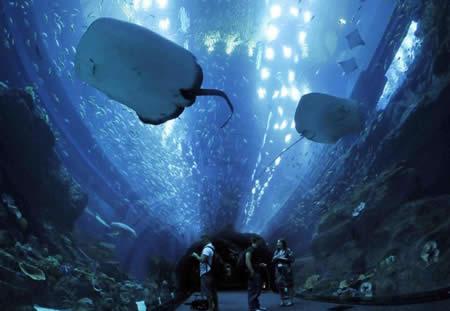 Aquarium-de-Dubai-dans-le-Dubai-centre-commercial_mesfavorisites.com