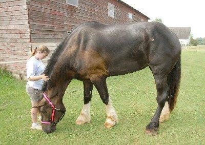 einstein plus petit cheval du monde ces animaux incroyables. Black Bedroom Furniture Sets. Home Design Ideas