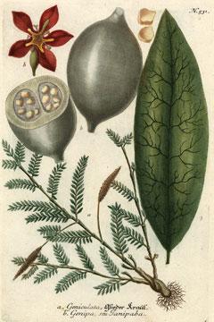 tatouage- au -jagua