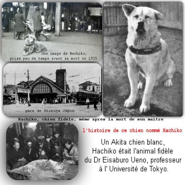 histoire-Hachiko-un -Akita_48e3eefd4559227e06d2MEFA