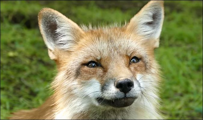 le-village-aux-renards -au-Japon
