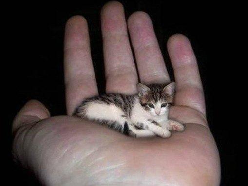 le plu petit chat du Monde