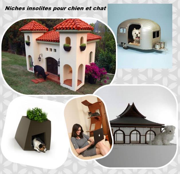 niches-insolites-pour-chien-et-chat