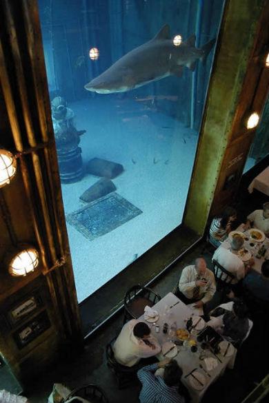 Plus-grand-aquarium-mesfavorisites.com