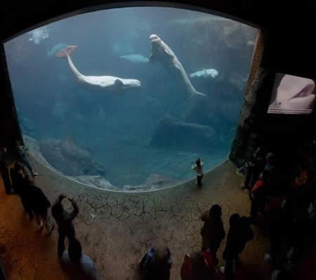 Plus-grand-aquarium-en-Afrique_mesfavorisites.com