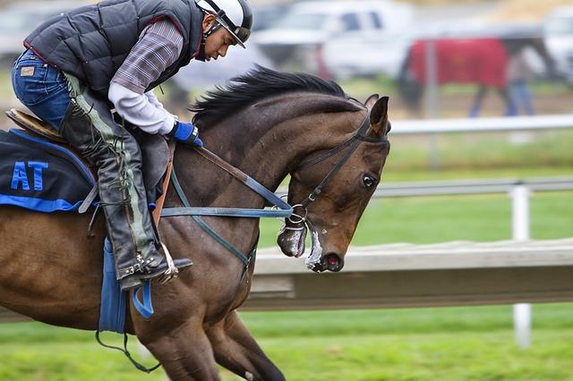 racehorse-cheval de course, cheval, piste de course, le sport, la concurrence, hippodrome, jockey , photos