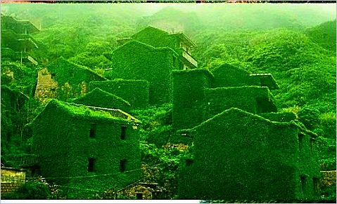 verdure -englouti-maisons-village --Zhoushan-Chine-2